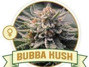 Bubba Kush Feminized