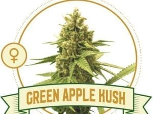 Green Apple Kush Feminized