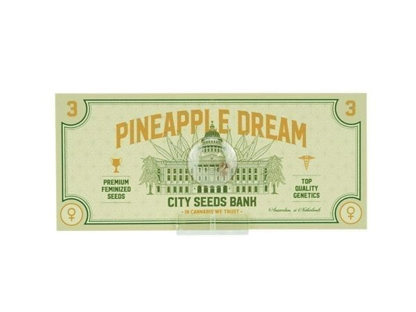 Pineapple Dream Feminized