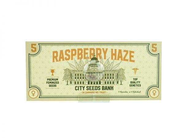 Raspberry Haze Feminized