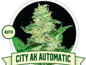 City AK Auto