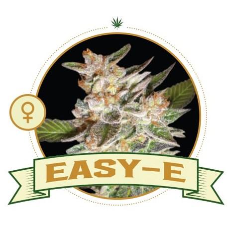 Easy E Feminized