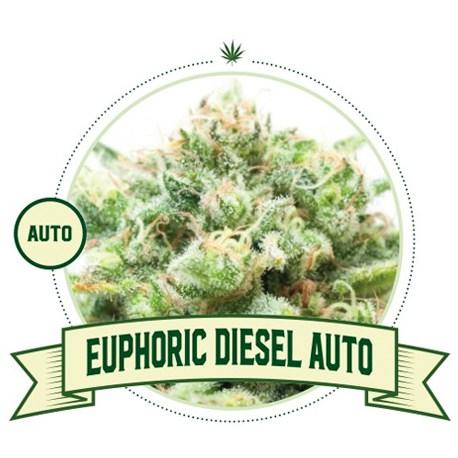 Euphoric Diesel Auto