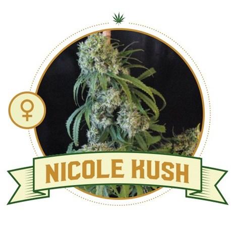 Nicole Kush Feminized