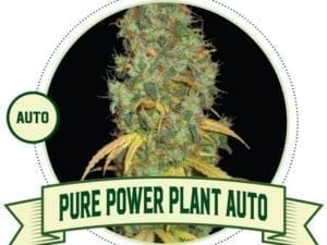 Pure Power Plant Auto