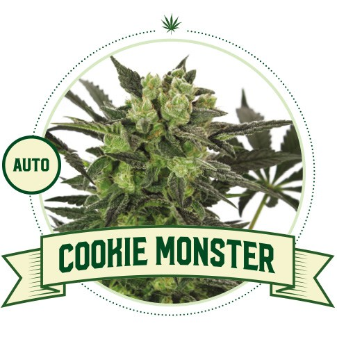 Cookie Monster Automatic